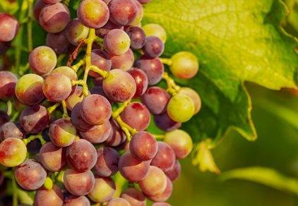 grapes-3555214__340