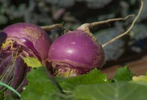 turnips-2097780_640