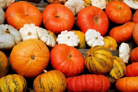 pumpkins-2714744_1920.jpg