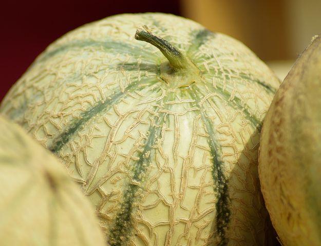 Comment choisir son melon